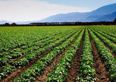 Leadership Farm Systems