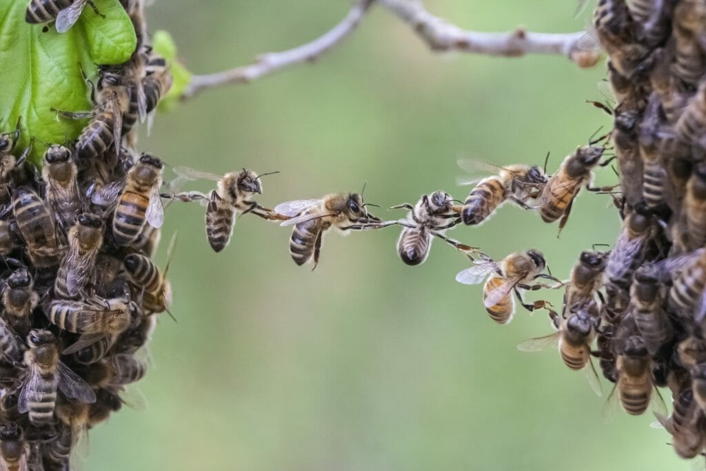 A team of bees trust each other to get work done